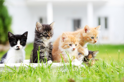 Free Samples & Coupons for Kittens