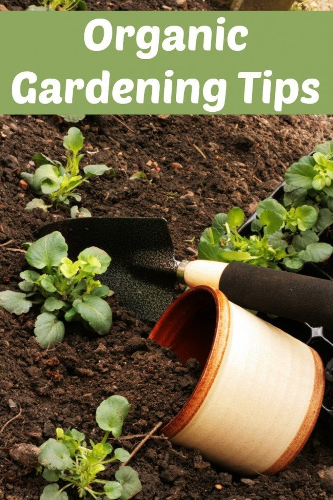 Check out our best Organic Gardening Tips to help you get started with a wonderful healthy vegetable garden this year!
