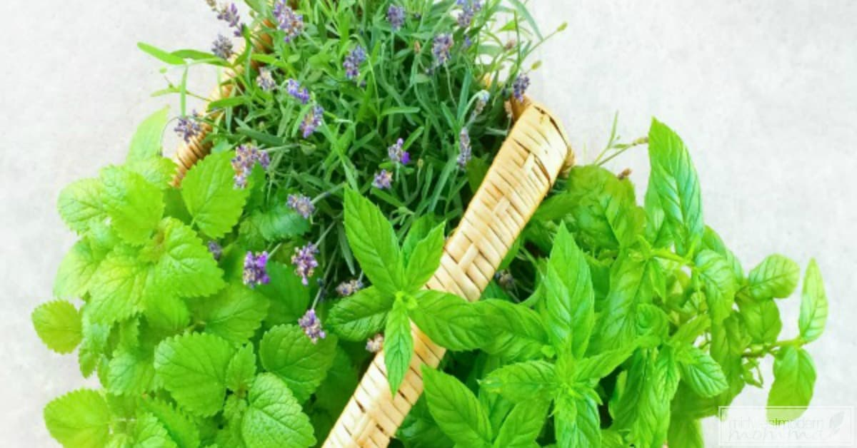 Preserving Fresh Herbs is easy with our great tips! Save money and prepare amazing delicious meals with these tips!