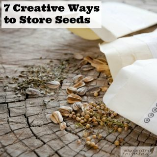 How To Store Seeds: 7 Creative Solutions