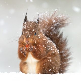 Care For Animals this winter with these great tips! Our 7 Ways To Care For Animals During Winter are ideal for keeping the neighborhood critters happy!